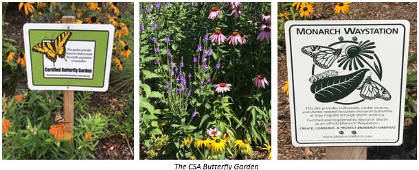 On July 31st, The Butterfly Garden Was Monitored From Approximately 11:30  A.m.   12:30 P.m. And The Following Pollinator Species Were Observed.