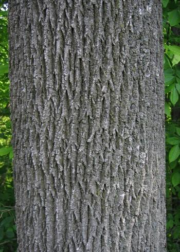 assembler tree trunk test regression